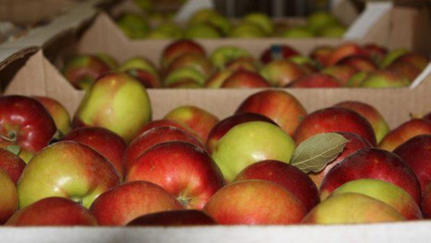 Россельхознадзор желает проверить места хранения яблок в Беларуси